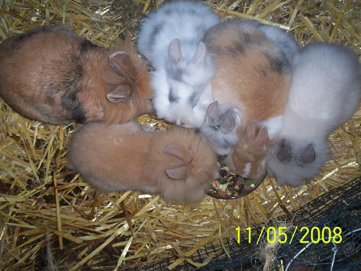6 Kaninchen beim Fressen