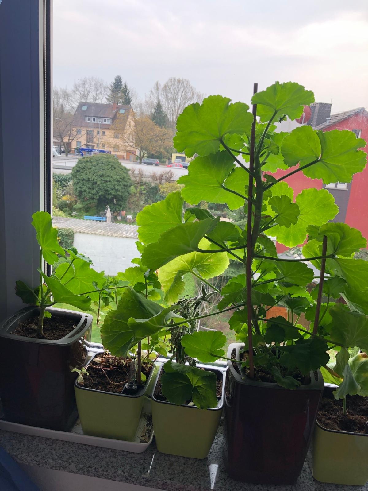 5 bepflanzte Töpfe auf einer Fensterbank.